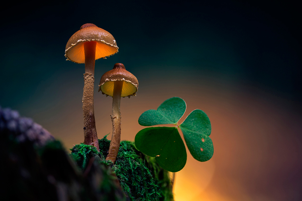 Glowing-mushrooms-1.thumb.jpg.a533e9bc4e29a3976448abb692e24485.jpg