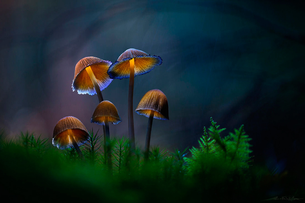 Glowing-mushrooms-10.thumb.jpg.614fdd3d44ef6017207697d016a7360e.jpg