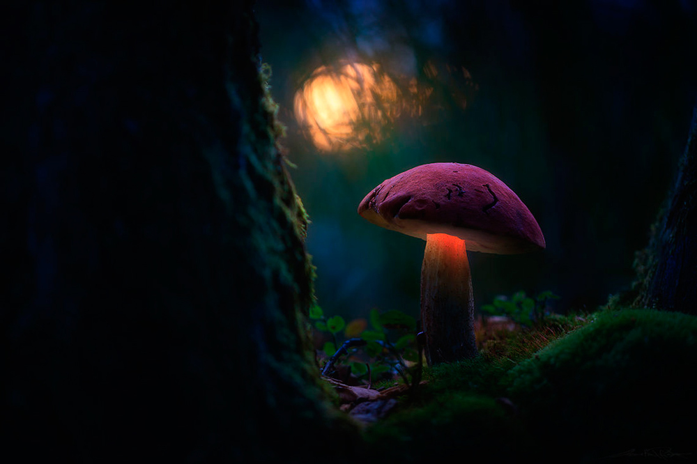 Glowing-mushrooms-11.thumb.jpg.7911823c7dd8e4852745e4e4e9d958c5.jpg