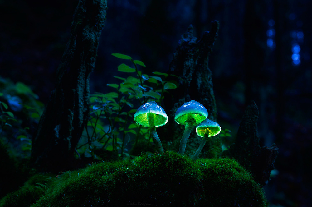 Glowing-mushrooms-12.thumb.jpg.5e726974e2c783cec2041608baf7b90c.jpg