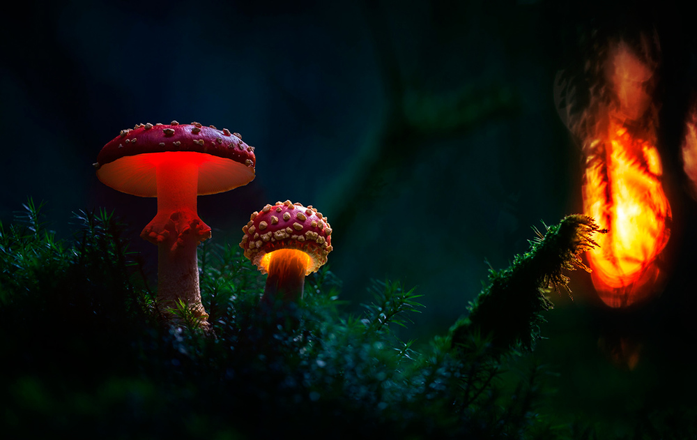 Glowing-mushrooms-5.thumb.jpg.fa25efcccea4ae8aac4daba4f9087edf.jpg