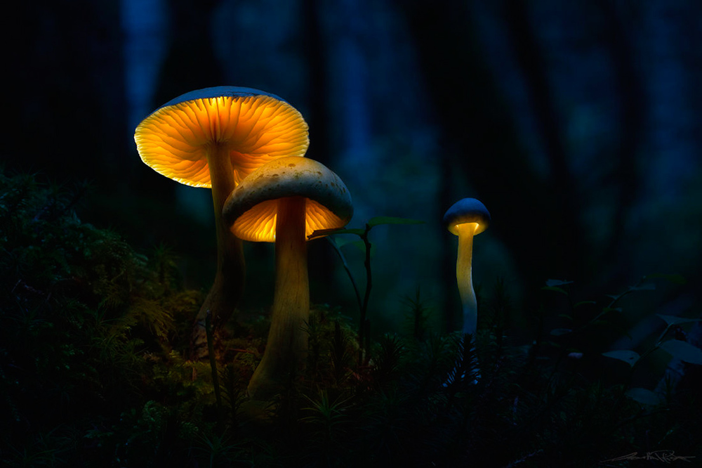 Glowing-mushrooms-8.thumb.jpg.65a86bc56933a1474aed2f3a9ee8edec.jpg