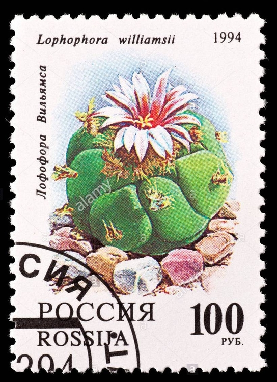postage-stamp-from-russia-depicting-a-peyote-cactus-lophophora-williamsii-EAR53K.jpg